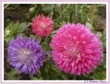 Small flower family