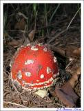 Delecious mushroom