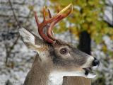 WV Whitetail Deer Diaries ~ Fall 2005