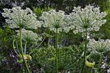 Norwegian wild flowers and other beauties
