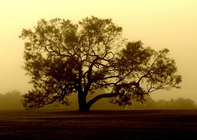 The Harvest Tree