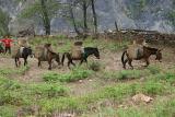Lastpferde / work horses