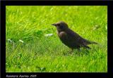 Baby Starling.jpg