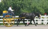 Walnut Hill Carriage Competition 2005