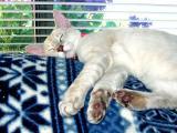 Pogo Imitating the Chessie Cat