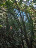 Cezanne_window.jpg