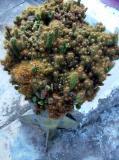 Unusual Planter