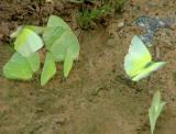 Flutter-Bys