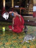 Jumping Cat Monastery