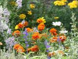 Summer - LaGuardia Corner Gardens