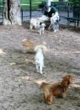 Dog Run for Small Dogs
