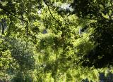 Late Summer Light & Foliage