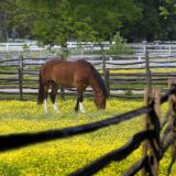 Happy Horse in Pasture