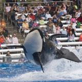 Shamu and Audience