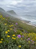 Cape Peninsula coastline
