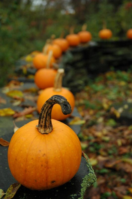 Line-O-Pumpkins