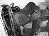 kentucky's new saddle