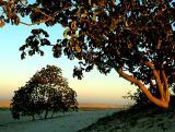 Las Lomas Sunset