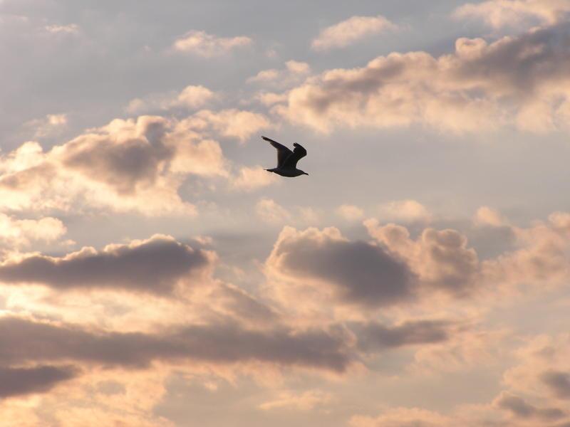 On a wing.jpg
