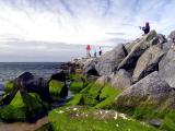 Green rocks and fish.JPG