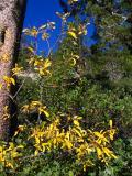 A Hint of Autumn (IMG_0185.JPG)