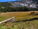 Meadow At 8500' Elevation (IMG_0208.JPG)