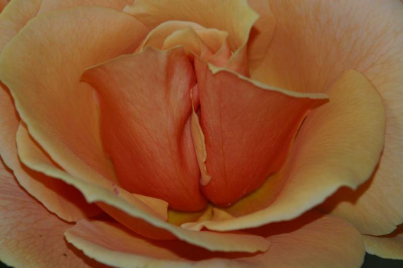 увеличенные фото вагины должное