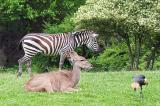 Zebra, etc.