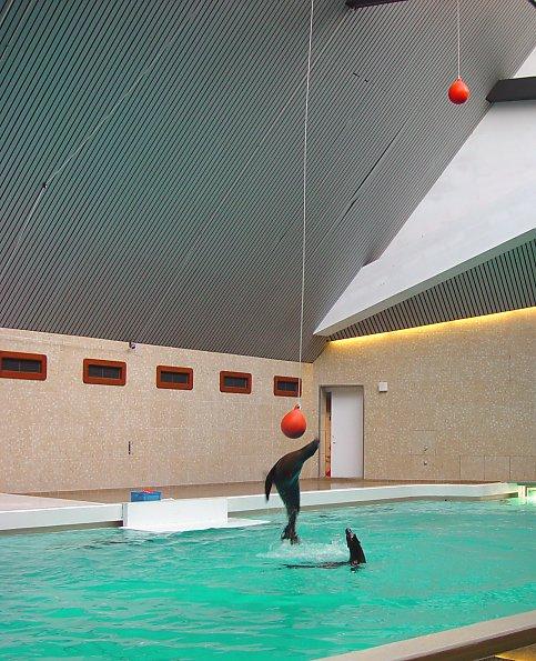 Nuremberg Zoo - playing ball