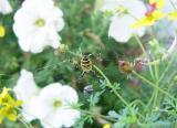 In the Garden - Spider and prey