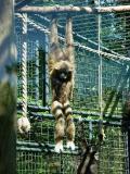 Nuremberg Zoo - Hanging out