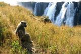 Victoria Falls - Taking in the scenery..