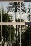 Window of palms