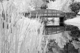 8/10/05 - Meadowlark Botanical Gardens
