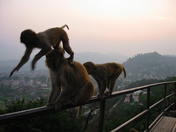 Monkeys at Swayambhunath