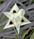 z IMG_0051 Flower-4.jpg