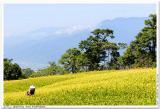 赤科山•Behind The Formosa
