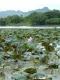 Lotus worker