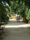 Golden monks