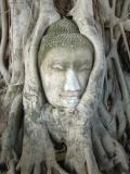 Buddha hace