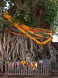 Buddha in a Bodhi tree