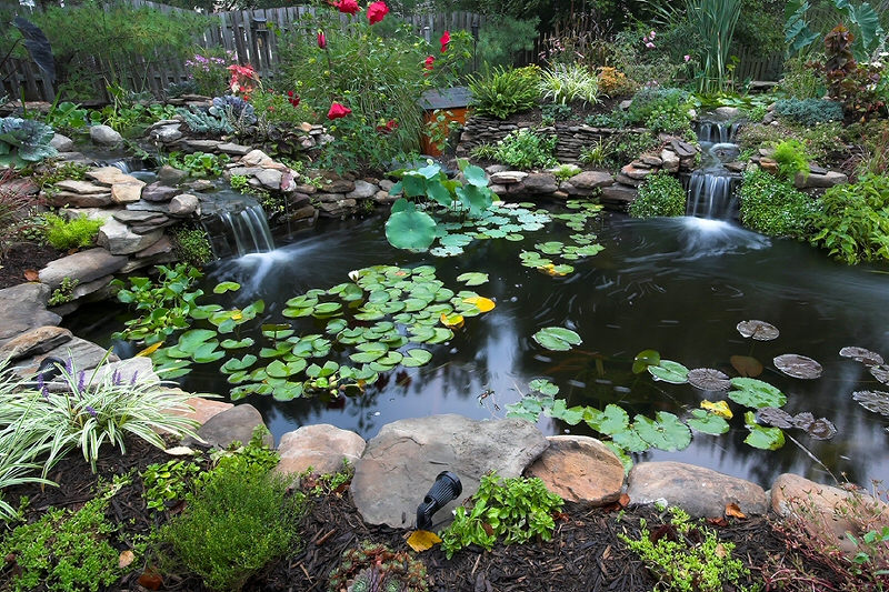 Click here for more pictures of Our Pond