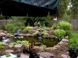 Pond in the Rain