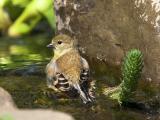 Finch Bath