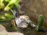 Finch Bath #2