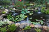 Our Koi Pond Gallery (and friends)