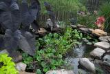Smokey Inspects the Plant Pond