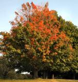 Fall's a Comin'