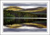 Colours, Loch Garten, Invernesshire, Scotland