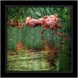 Flamingoes, Cricket St. Thomas, Somerset